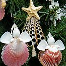 She sells Seashells by AnnDixon