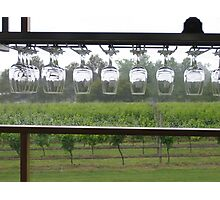 Winery Glass Lineup Photographic Print