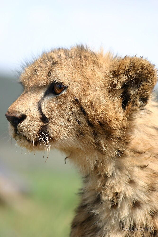 Young Cheetah Cub by Debbie Schiff