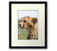 Young Cheetah Cub Framed Print