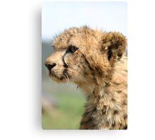 Young Cheetah Cub Canvas Print