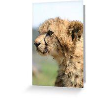 Young Cheetah Cub Greeting Card
