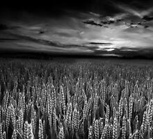 The Sky's Audience BW by Andy Freer