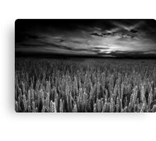 The Sky's Audience BW Canvas Print