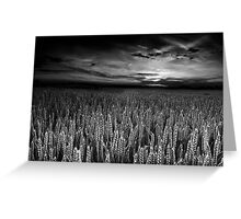 The Sky's Audience BW Greeting Card