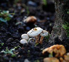 Mushrooms by Declan Carr