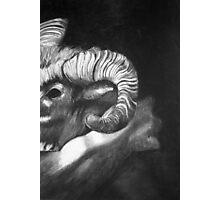 Rams Horn Photographic Print
