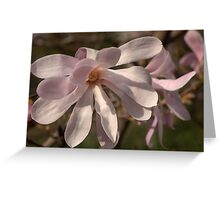 Spider Magnolia – Munich, Germany Greeting Card