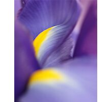 Revealing Her Inner Beauty - Purple Iris Photographic Print