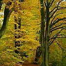 Rainy day in the golden autumn forest by Trine