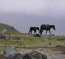 Wild Horses at Cotopaxi by buttonovski