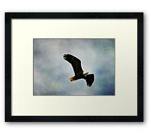 Free Bird Framed Print