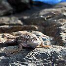 Blue belly fence lizard by SKNickel
