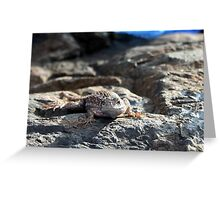 Blue belly fence lizard Greeting Card