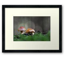 Mushroom hunt Framed Print