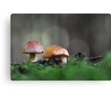 Mushroom hunt Canvas Print