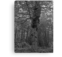 Eerie Chillingham Woods Canvas Print
