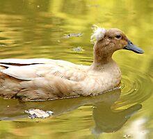 Duck on the yellow lagoon by Ramír Delgado