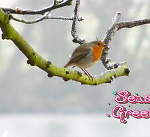 A Bird on a Branch by AngelaFoster