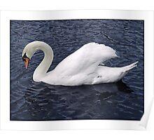 Swan - (Hartham) Poster
