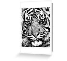 Sumatran Tiger Cub Greeting Card