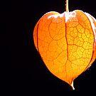 Orange glow by Yool