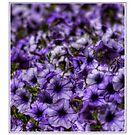 Lilac Haze by GerryMac