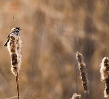 Sparrow and Cat Tails by JimGuy