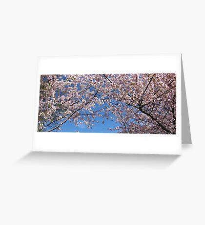 Japanese Cherry Blossom Tree - Washington Greeting Card