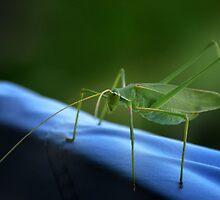 Grass hopper by nphotographer22