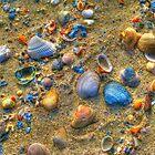 Seashells Aglow by Michael Rubin