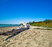 Driftwood on Lake Huron by Gary Paakkonen