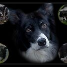 The Wonderful Border Collie by Chris Clark