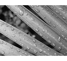 Blade Drops-(B&W) Photographic Print