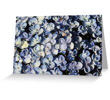 Light Blue Hydrangea-(Floral Macro) Greeting Card