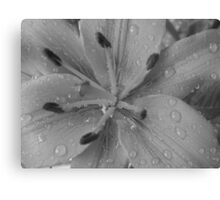 Orange Date Lilly Drops-(Macro)-B&W Canvas Print