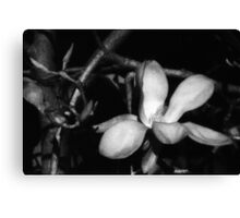 there be magnolias in my garden of dreams Canvas Print