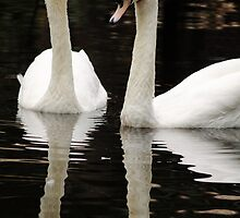 The Lovely Pair by Phillip  Simmons