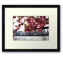 Manhattan Through the Cherry Blossoms. Springtime color photo. Framed Print
