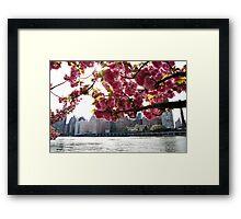Manhattan Through the Cherry Blossoms. Springtime color photo. Framed Print