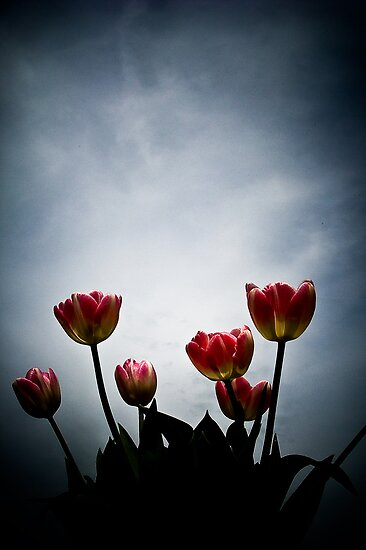 Tulips by Hilary Walker