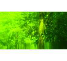 Green Wood Serie n°2 Photographic Print