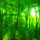 Green Wood Serie n°4 by edend