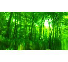 Green Wood Serie n°4 Photographic Print
