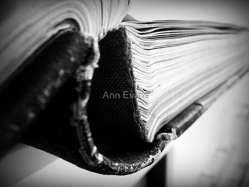 Old Pages  by Ann Evans