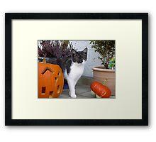 Halloween Holly  Framed Print