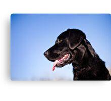 Dallas the Labrador Retriever Canvas Print