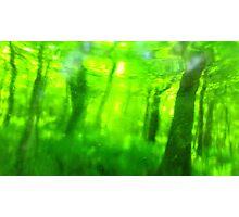 Green Wood Serie n°5 Photographic Print