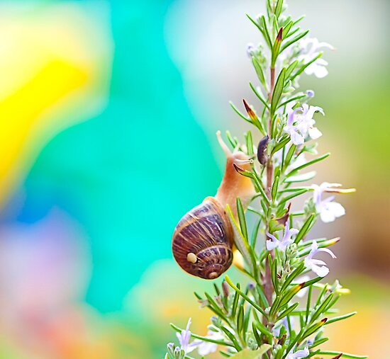 the beautiful snail by Carol Yepes