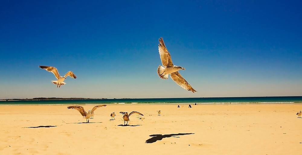 seagulls in the beach by Carol Yepes